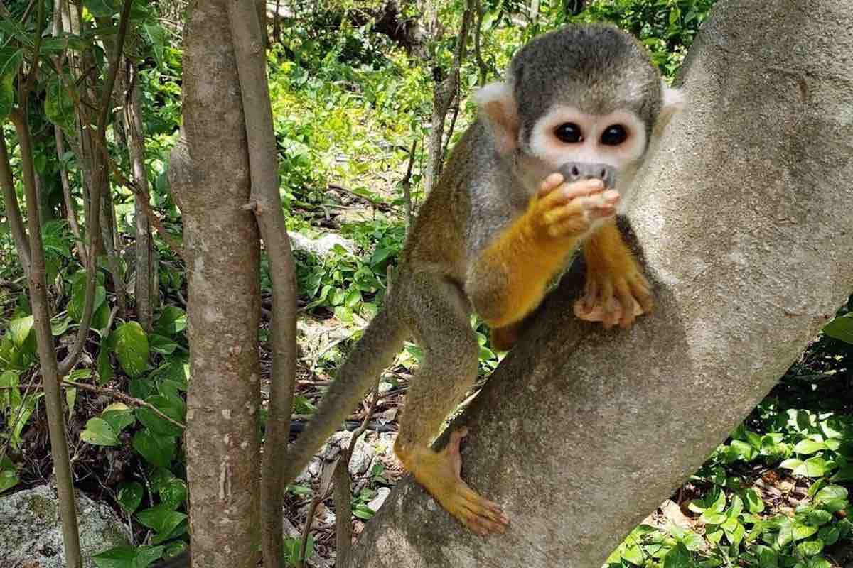 Miami Date Ideas: Monkey Jungle